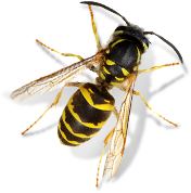 Greenline Pest